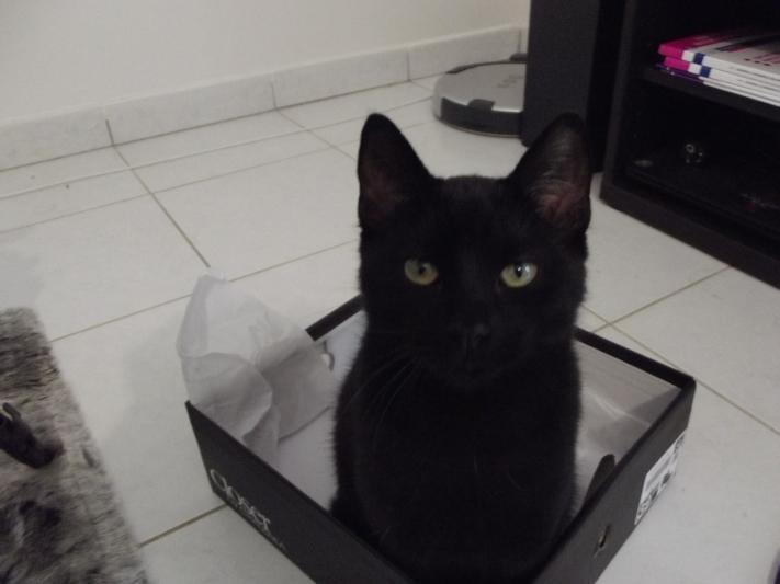 Black clothes lady alexandra blog black cat